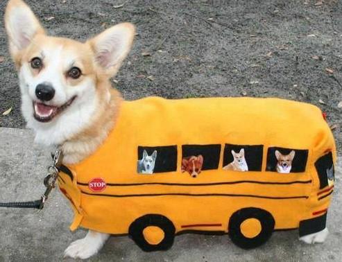 Pes Autobus Kybl Srandy