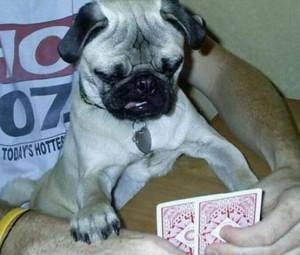 Pes hráč
