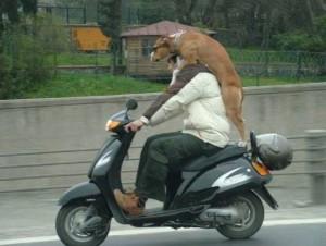 Pes na skútru