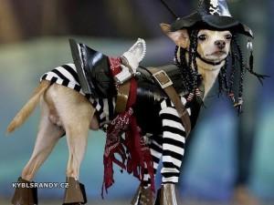 Pes pirát
