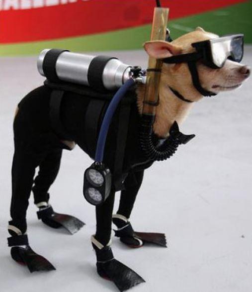 Pes potápěč
