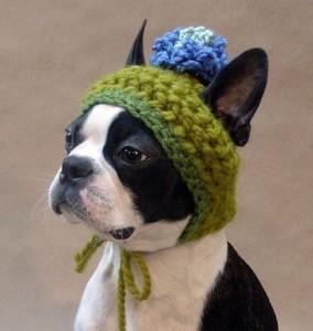 Pes v čepici
