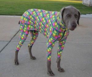 Pes v obleku