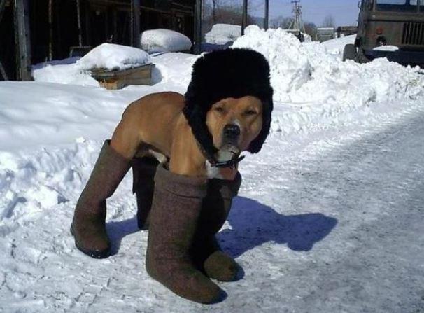 Pes v zimním oblečení