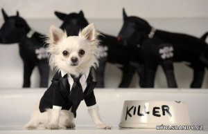 Pes zabiják?