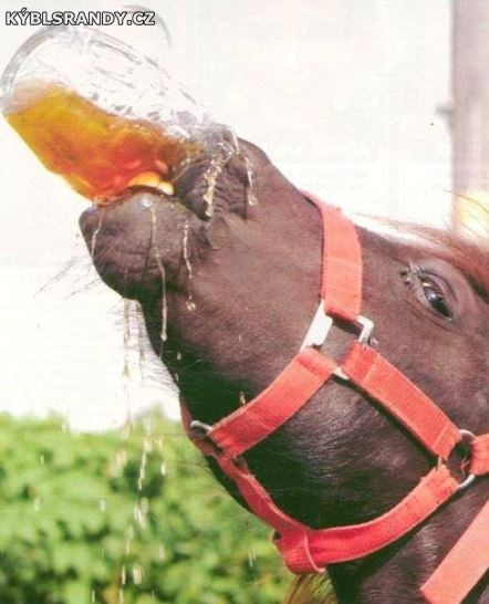 Pivo chutná už i koňům
