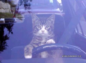 Pozor, to auto řídí kočka!