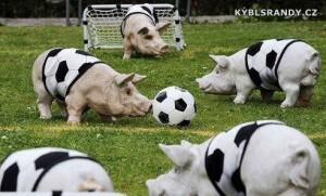 Prasečí fotbal