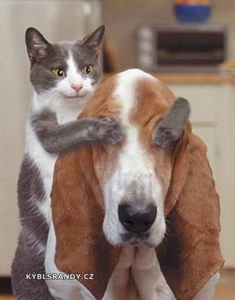 Kočka má překvápko