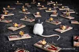 Vždy připravená myš