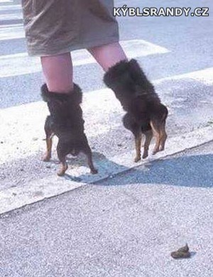 Psí boty