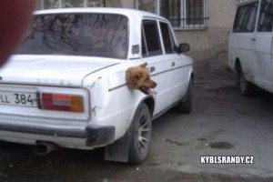Z nádrže auta kouká psí hlava