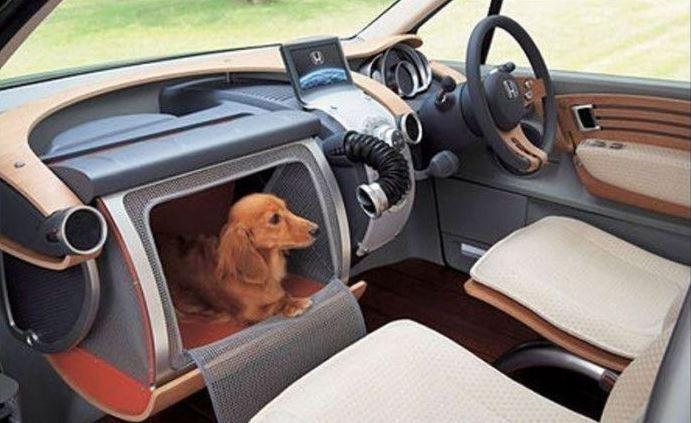 Psí pelíšek v autě