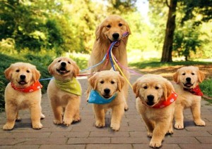 Krásná psí rodinka