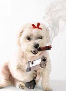 Psí slečna s doutníkem a pistolí