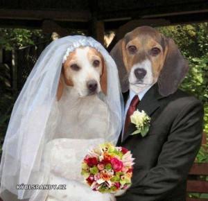 Psí svatba
