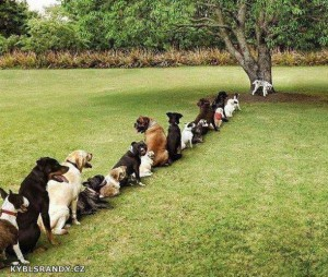 Fronta na psí WC