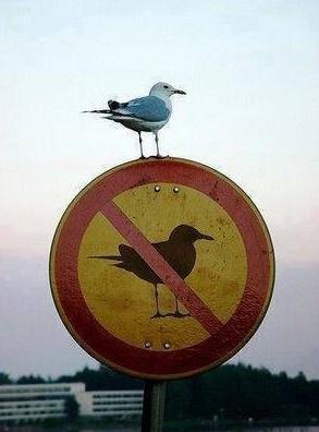 Ten pták snad nezná značky