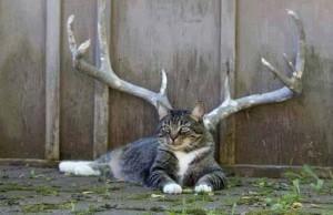 Rohatá kočka