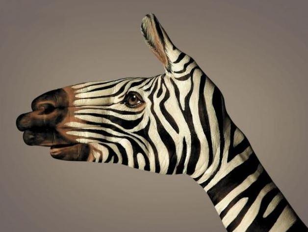 Ruka - zebra