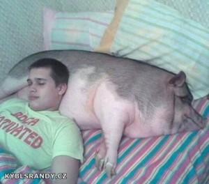 Spíme s prasetem