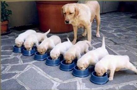 7 štěňat a jejich matka