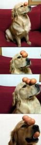 Šikovnej pes