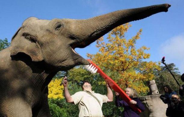 I slon potřebuje vyčistit zuby