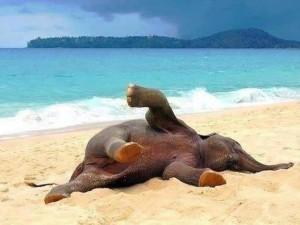 Sloní pohodička na pláži