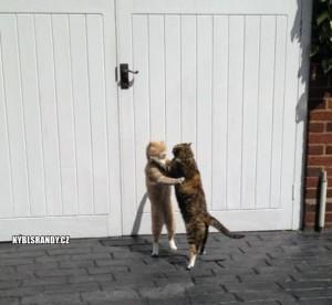 Souboj koček