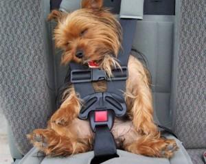 Roztomile spící pes