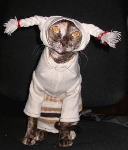 Srandovní kočka