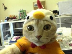 Zábavná kočka