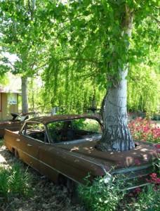 Strom v autě