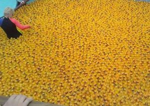 Tisíce žlutých kačenek