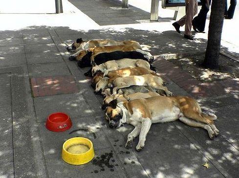 Unavená psí smečka