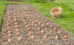 Sázená velikonoční vajíčka