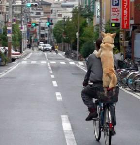 Vezeme psa na kole