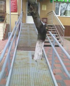 Asi vzácný strom
