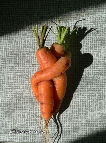 Zamilovaná mrkev