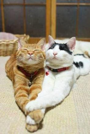 Zamilované kočky