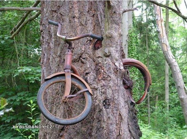 Zarostlé kolo ve stromu