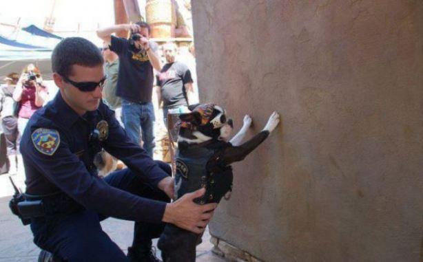 Zatýkání psa - motorkáře