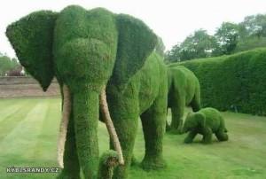 Zelená sloní rodinka