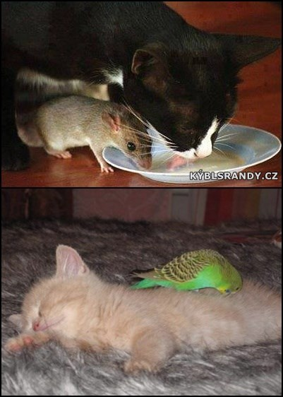 Zvířecí kamarádi