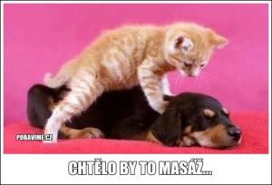 Zvířecí masáž