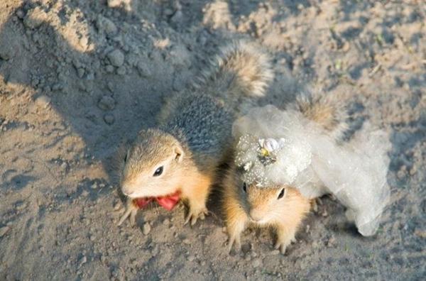 Zvířecí svatba